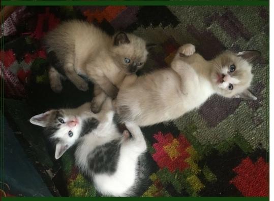Perseverenţă pisicească – găsiţi copiii pe….