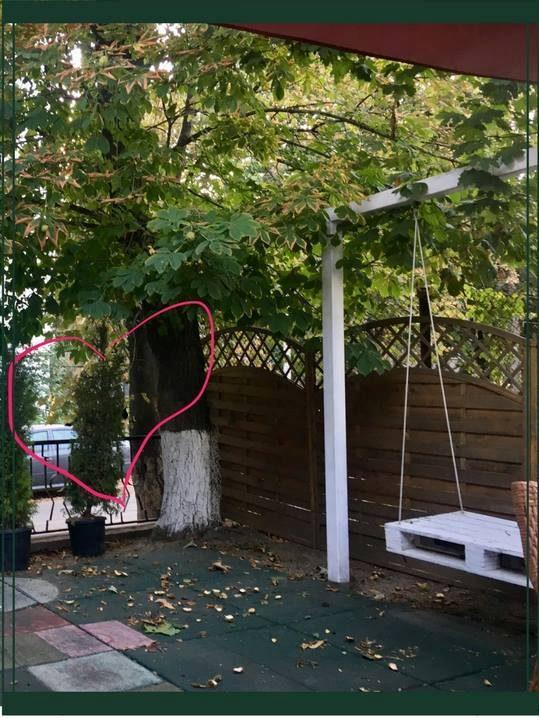 Mergi direct catre obiectivul tau, cum face pisica pe gard