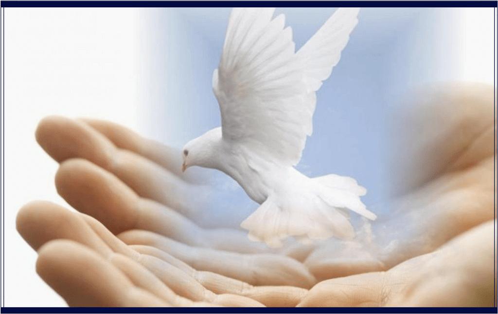 7 pasi simpli pentru a practica iubirea plina de bunavointa