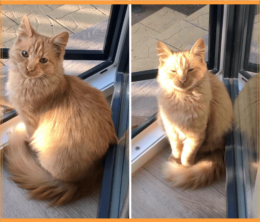 5 +1 lectii pe care le putem (re)invata de la pisici
